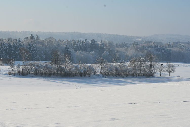 8052 Beauty In Nature Clear Sky Cold Temperature Great Views Nature Nikon D7100 Outdoors Snow Covered Winter WoodLand