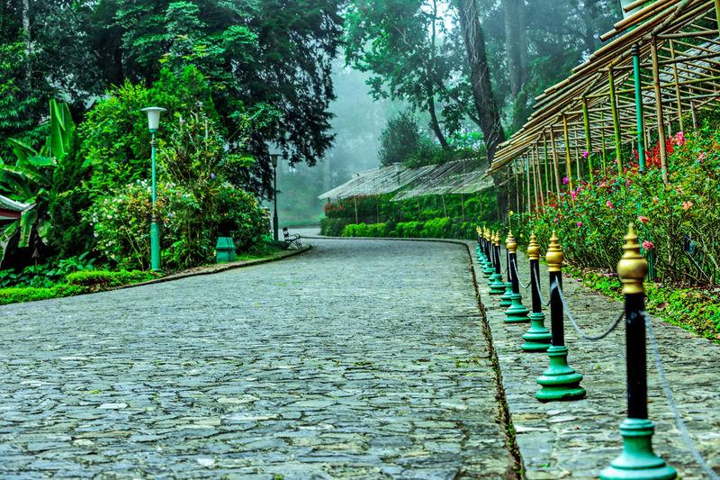 Empty road amidst trees during rainy season