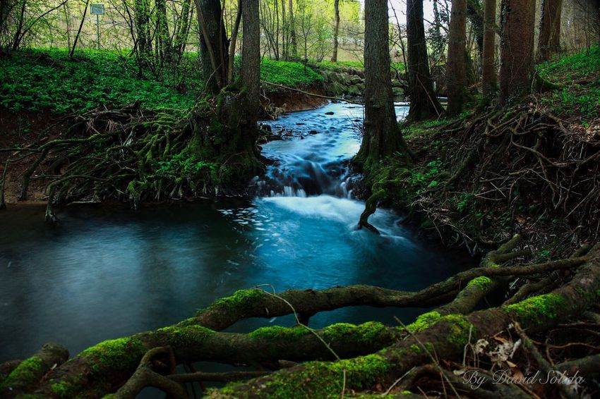 Wenn du nicht aufhören kannst daran zu denken, hör nicht auf dafür zu kämpfen. Forest Tree Nature Beauty In Nature Travel Destinations Waterfall Canonphotography Photography