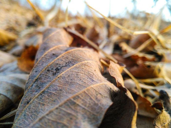 Leaf Biology