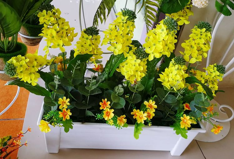 Plastic flower Yellow Flower Plastic Material Flower Plant Freshness Growth Fragility Day Outdoors No People Close-up