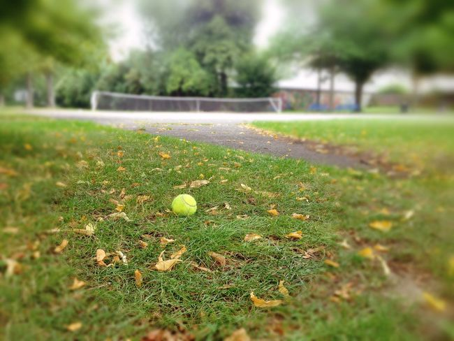 Ball Day Depth Of Field Grass No People Outdoors Sport Tennis Tennis Ball