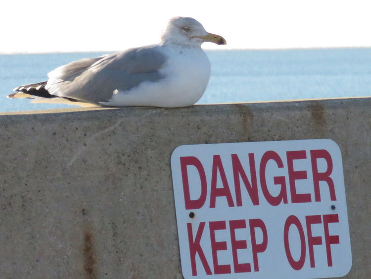 Silly seagull! Animals In The Wild Beach Beaker Bird Can't Read Close-up Communication Day Funny Sign Hampton Beach Handsome Biscuit Nature New Hampshire No People Not Afraid Not Listening One Animal Outdoors Perching Seagull Resting Silly Bird Taking It In