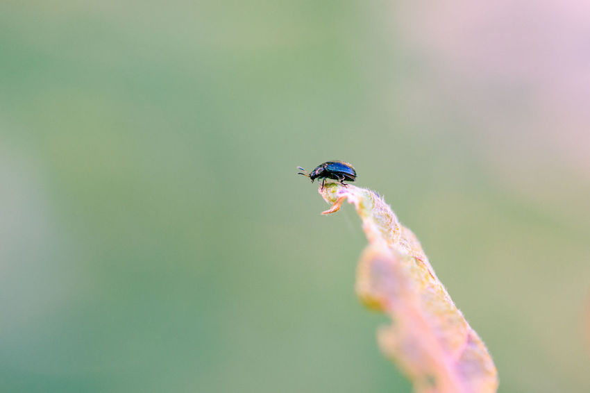 Alone Bug Isolated Nature Nature Photography On Top Animal Themes Close-up Insect Insects  Macro Macrophotography Nature One Animal One Insect Outdoors Plant Single Summer Wildlife