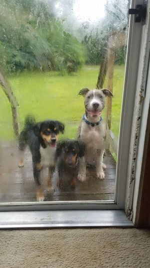 PlayDATE Can You Come Out And Play? Visitors Puppies Neighborhood Lurking Doggielove Wanna Play?