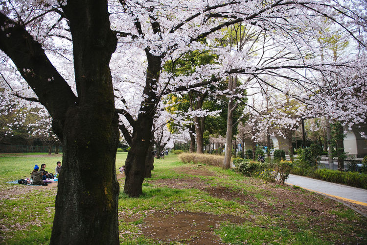 Akatsuka Park, Tokyo. Sakura Season 2016. Beauty In Nature Bench Branch Building Exterior Built Structure Day Flower Footpath Grass Growth Incidental People Lawn Nature Park Park - Man Made Space Sakura Shadow Sunlight Tree Tree Trunk