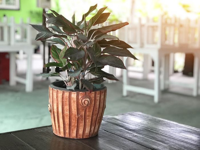 Brown tree pot And the leaves are green and brown. Put on a wooden table with blurred background and with light flare. Plant Focus On Foreground Potted Plant Nature No People Table Growth Close-up Decoration Beauty In Nature Outdoors Day Flower Wood - Material Flowering Plant Vase Architecture Flower Pot Freshness Houseplant