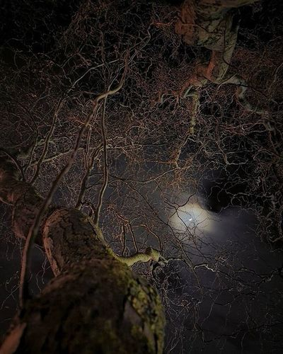"""""""The last night""""🌙 Moon Night Branches Trees Nature Landscape Nightphotography Naturepics HDR Ic_hdr Ic_landscapes Hdrspotters Blacksky Lr Snapseed"""