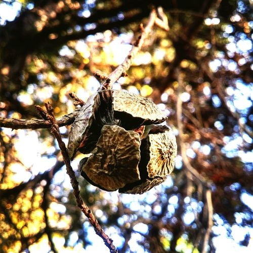 Animals In The Wild Animal Themes Insect No People Day Animal Wildlife Branch Tree Nature Outdoors Perching Close-up Bird