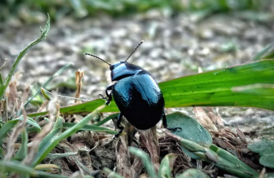 Insect One Animal Animals In The Wild Animal Themes Animal Wildlife Day No People