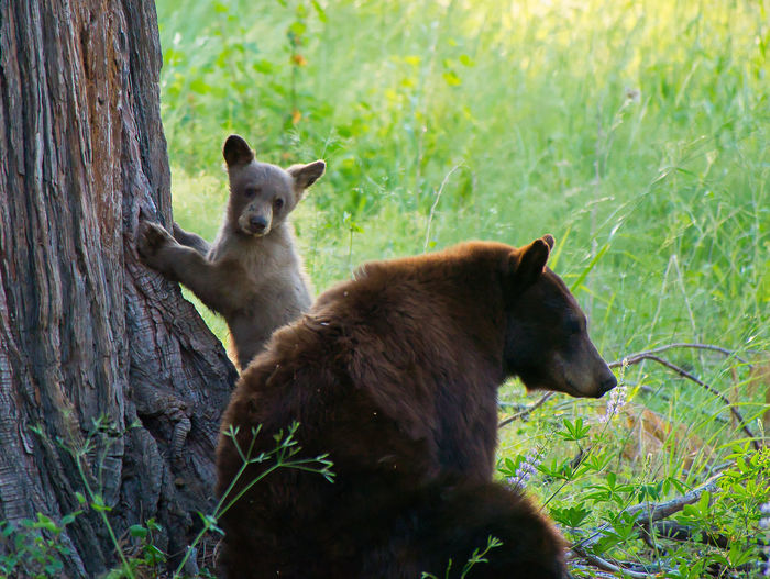 View of bears on field