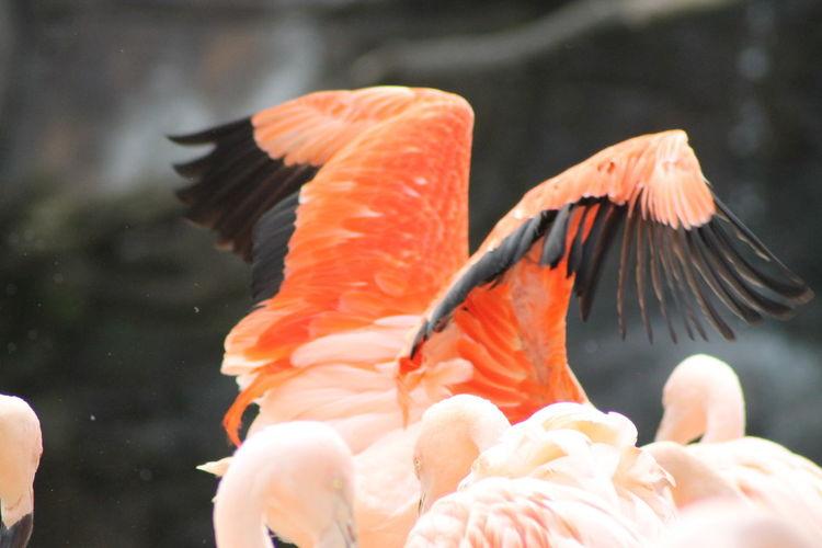 Close-up of orange birds flying over sea