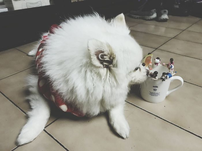 Full Length High Angle View Animal Themes One Animal Domestic Animals Adults Only Pets Only Men One Man Only Indoors  Mammal Adult People Day OpenEdit Fuchiko