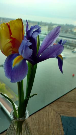Flower Petal Beauty In Nature Flower Head Freshness Tulip Fragility Nature Purple Iris - Plant Vase Plant No People Amsterdam City Outdoors Tranquility Day Sky