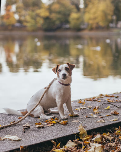 Dog standing in lake during autumn