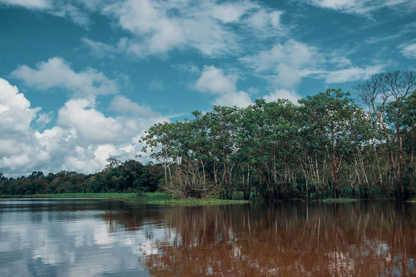 Sky Water Outdoors Day Reflection Nature Cloud - Sky Lake River Travel Destinations Adventure Amazon Rainforest Jungle South America Latin America Idyllic Non-urban Scene Green Color No People Waterfront Growth Tranquil Scene Tree Plant A New Perspective On Life
