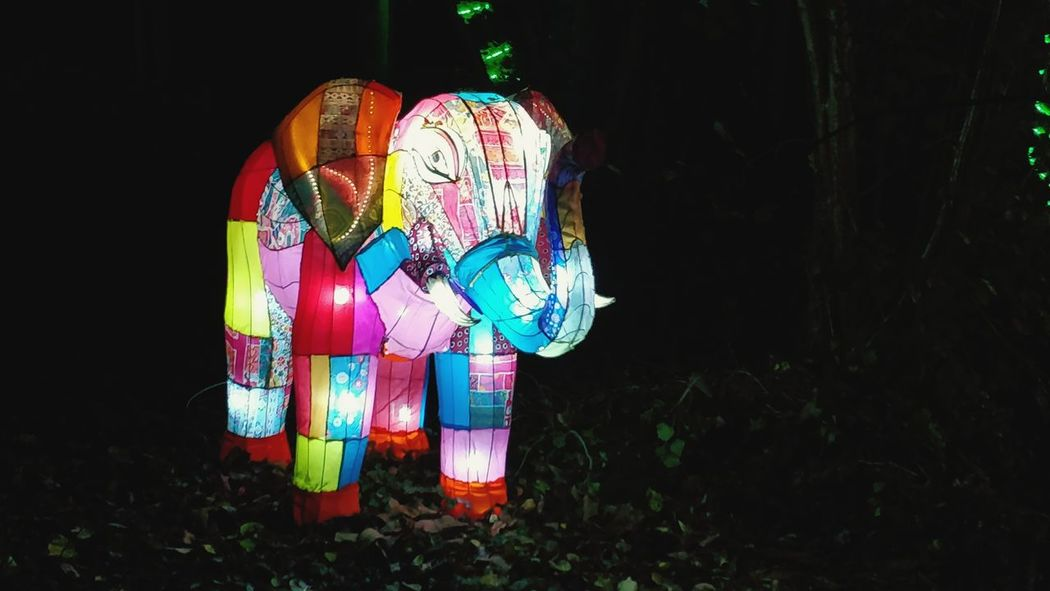 Multi Colored Black Background No People Outdoors Tree Isle Of Wight  Light In The Darkness Arts Culture And Entertainment Light Animal Elephant Statue Elephant