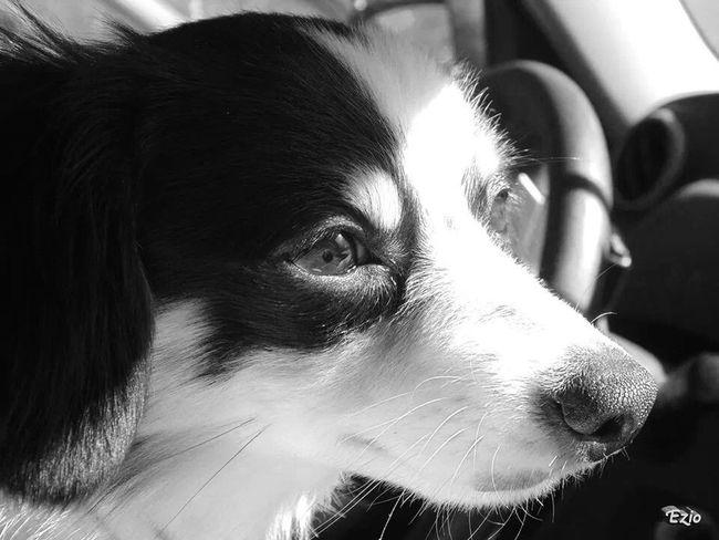 Pet Photography  Pet Portrait Pet Pets