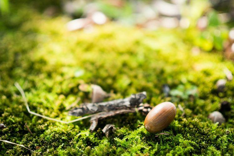 どんぐり拾い Nature EyeEm Nature Lover Nature Photography Photowalk Park Moss Acorn Olympus 中に虫が入ってませんように(*´人`*)