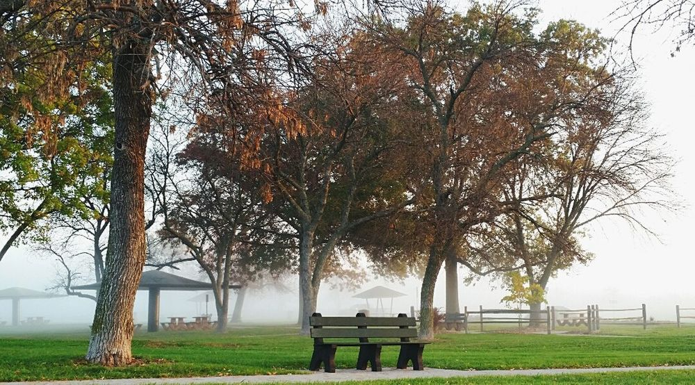 Picnic Table Picnic Bench Wooden Bench Fog Foggy Morning Foggy Day Foggy Weather Foggy Landscape Landscape Landscape_photography Picnic Tables Park Bench Park Wooden Fence Tree Trunk Foggy Park Trees Treescape Nature Nature Photography Nature Lover Foggy Evening Landscapes With WhiteWall