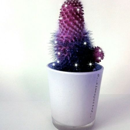 my nans cactus is so cute , but I made him pink and purple :) Cactus Plant Desertplants Pretty Pink Purple