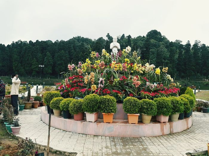 View of potted plants in garden