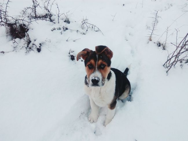 Small things sometimes means a lot. Pets Snow Portrait Winter Dog Cold Temperature Beagle Friendship Representing Puppy First Eyeem Photo