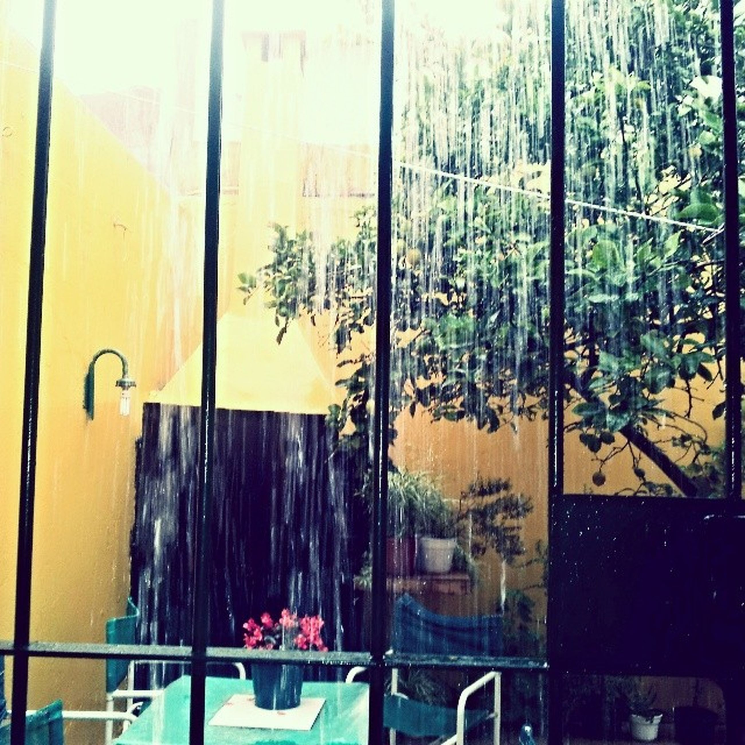 window, glass - material, yellow, built structure, architecture, building exterior, tree, closed, indoors, house, transparent, day, door, wall - building feature, growth, curtain, no people, plant, hanging, wall