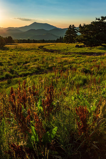sunset at the AZ Snowbowl Sunset Sunset_collection Golden Hour Travel Destinations Travel Photography EyeEm Selects Tree Sunset Rural Scene Agriculture Hill Field Social Issues Dawn Sunlight Summer Valley Atmospheric Mood Farmland Romantic Sky Mountain Range