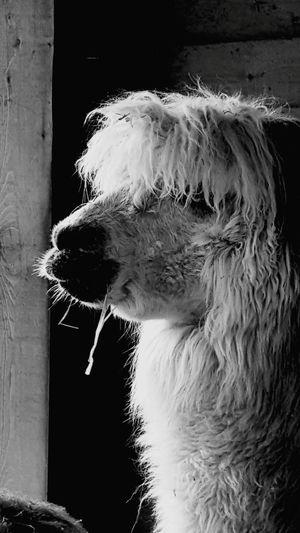 Pets Domestic Animals Animal Hair DogOne Animal Mammal Animal Themes No People Water Day Shaking Outdoors Close-up Pets Domestic Animals Animal Hair