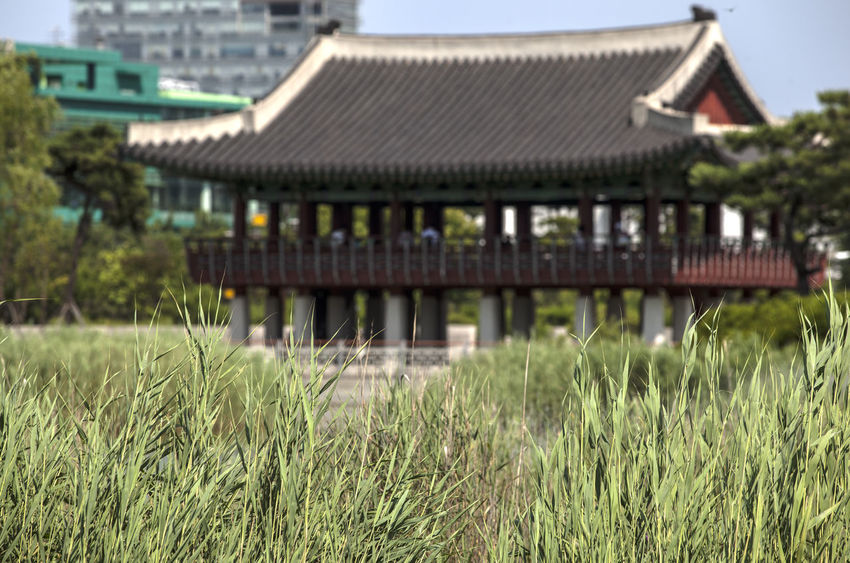 Architecture Beauty In Nature Building Exterior Built Structure Day Exterior Field Focus On Foreground Grass Grassy Green Color Growth Landscape Lawn Michuhol Park Nature No People Outdoors Plant Roof Rural Scene Sky Songdo, Incheon Tranquility Travel Destinations