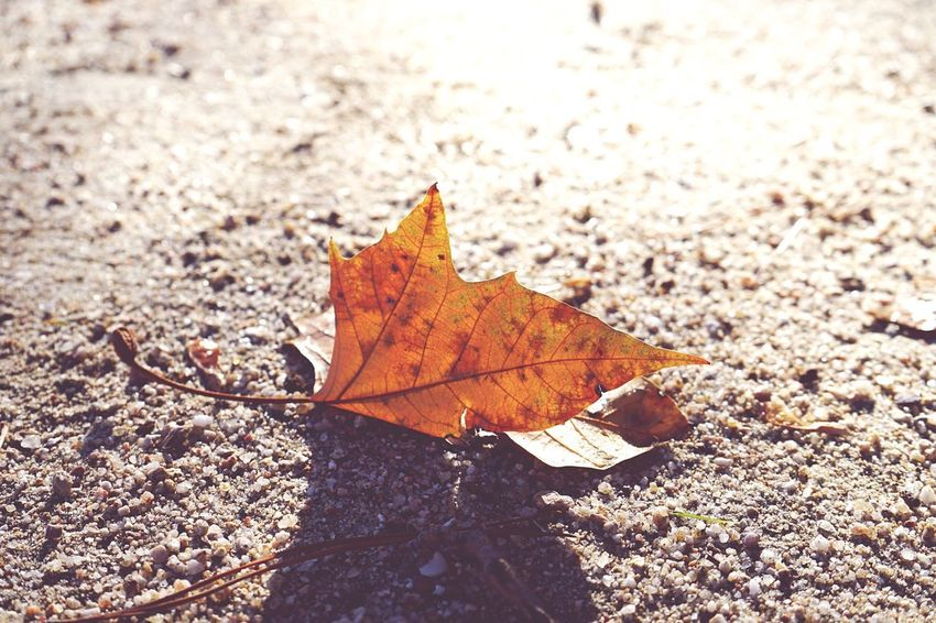 Sunday evening. Sand SONY A7ii EyeEm Shadows & Lights Shadow Contrast Sunlight Loneliness Autumn Change Dry Nature Day Outdoors Maple Leaf Maple Beauty In Nature No People Fragility Close-up