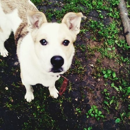 Любимая собака First Eyeem Photo