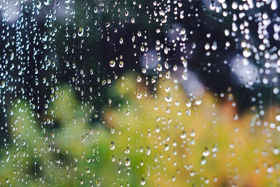 Rain raindrops water plants green trees window