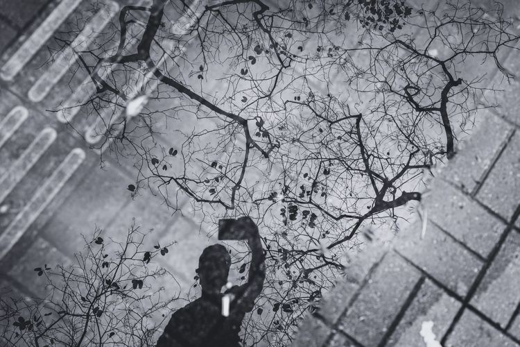 Reflection Tree Branch HongKong Discoverhongkong Leicaq Reflection Street Photography Tree Branches Black And White Awesome Our Best Pics Walking Around Behind The City Love Traveling Hello World From My Point Of View 香港 EyeEm Masterclass EyeEm Gallery EyeEm Best Shots EyeEm Best Edits The Street Photographer - 2016 EyeEm Awards Up Close Street Photography Shillouette My Favorite Photo