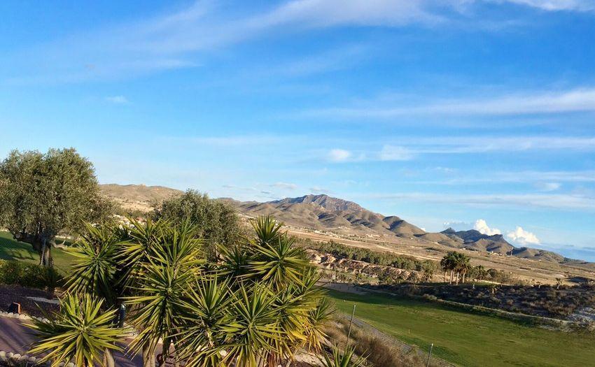 Fairway Golf Course Sunny Day☀ Landscape_photography Landscape #Nature #photography Palm Trees Mazarrón, Murcia
