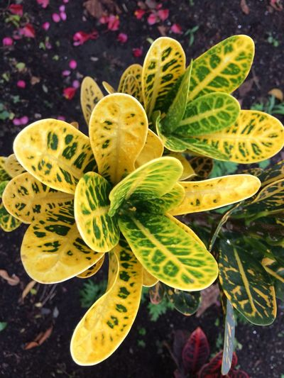 Plant Green Color Growth Nature Leaf Plant Part Succulent Plant