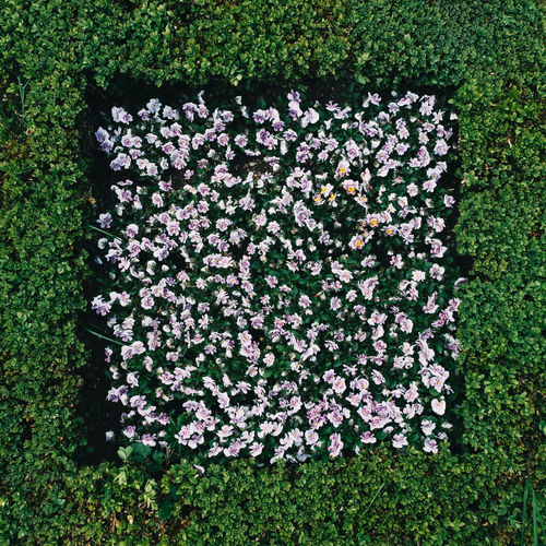 Flowers,Plants & Garden From Above  Garden Flowers Green Park Flowers Square Abundance Beauty In Nature Blooming Day Field Flower Flowers Freshness Garden Grass Green Color Greenery Growth Nature No People Outdoors Park Park - Man Made Space Plant