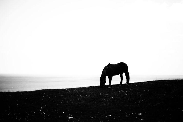 Silhouette horse on beach against sky