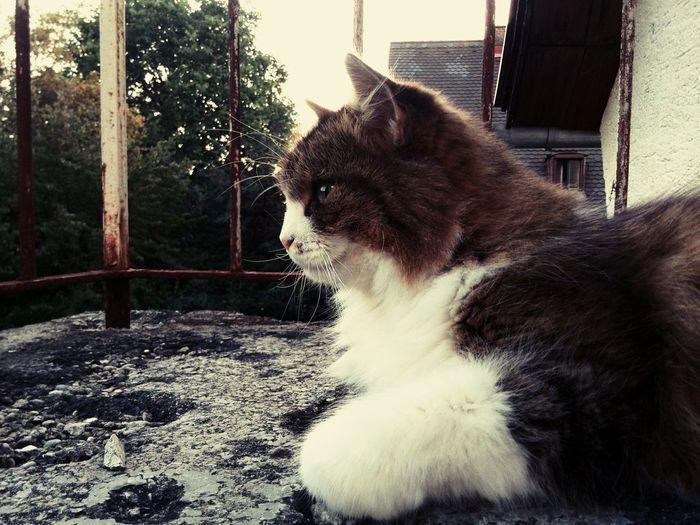 Cutecats Cute Pets I Love My Cat Momo<3 #Liebling