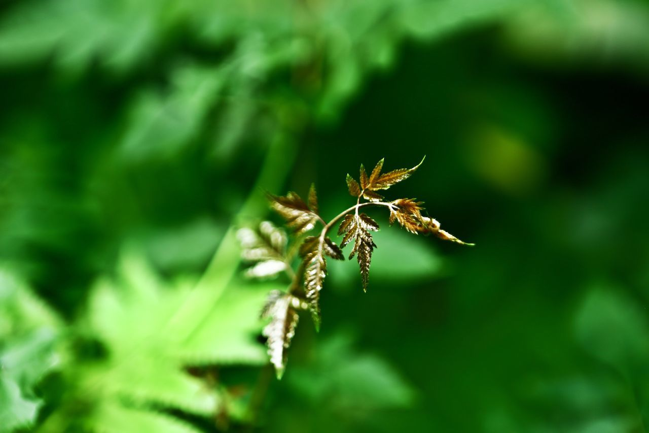 one animal, animals in the wild, animal themes, insect, green color, animal wildlife, nature, no people, outdoors, plant, day, close-up