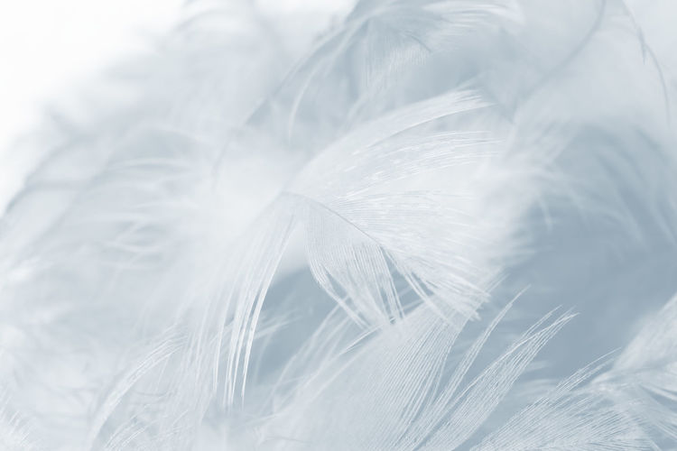 Close-up of feather