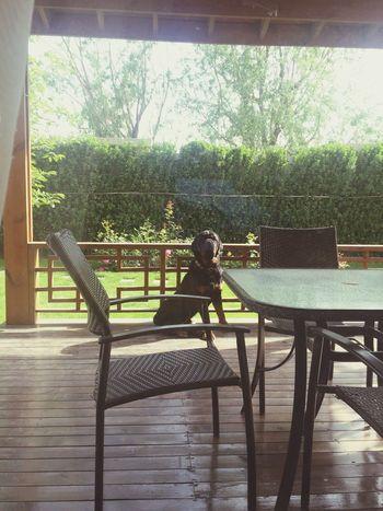 Summer2015 { My Lovely RottWeiler } I Love My Dog My Pet