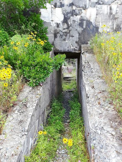 Plants growing by rocks and bridge