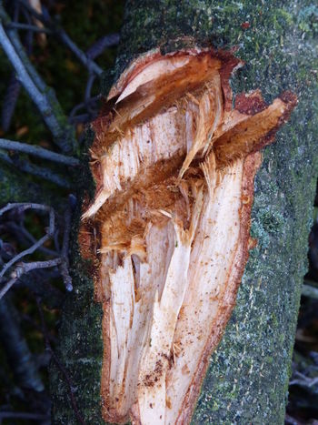 Holy nature art ... :-) Art And Craft Art Gallery Art Photography Beauty In Nature Branches Close-up Cutting Trees Cutting Wood Day Esoteric Art Fragility Gothic Art Holy Art Holy Spirit Mother Earth Creation Nature Nature Art Of Wood Nature Art Photography Nature Art Work Natureart No People Outdoors Spiritual Place Tree Tree Figure