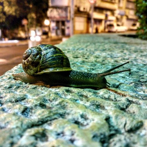 Snail Close-up No People Outdoors Nightshot