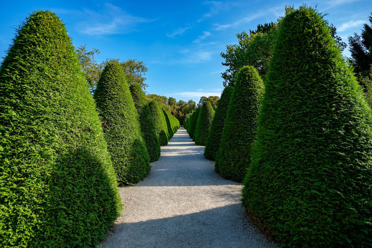 Schlosspark Schwetzingen Beauty In Nature Cloud - Sky Day Green Color Growth Maze Nature No People Outdoors Plant Scenics Shadow Sky Sunlight The Way Forward Topiary Tree