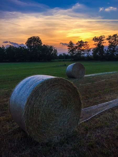 Agriculture Bale  Sunset Landscape Rural Scene Cloud - Sky The Great Outdoors - 2016 EyeEm Awards EyeEm Best Shots - Nature EyeEm Best Edits Check This Out EyeEmBestPics Sunrise_sunsets_aroundworld EyeEm Gallery EyeEm Best Shots EyeEm EyeEm Best Shots - Sunsets + Sunrise EyeEm Nature Lover Canonphotography Beauty In Nature