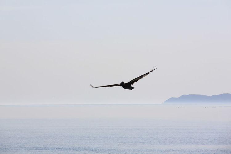 Birds flying over white background
