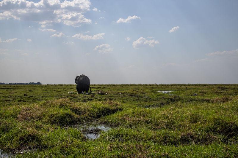 View of elephants grazing in field